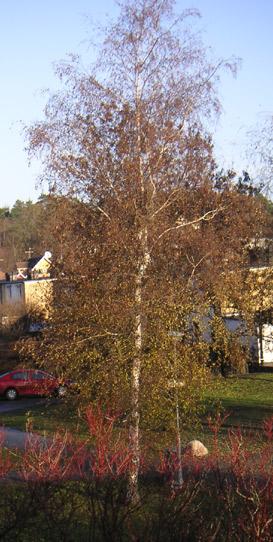 bjork-nov-06.jpg