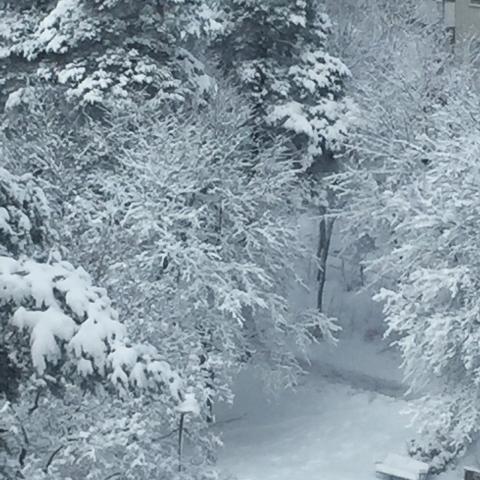 snow-3febr2018