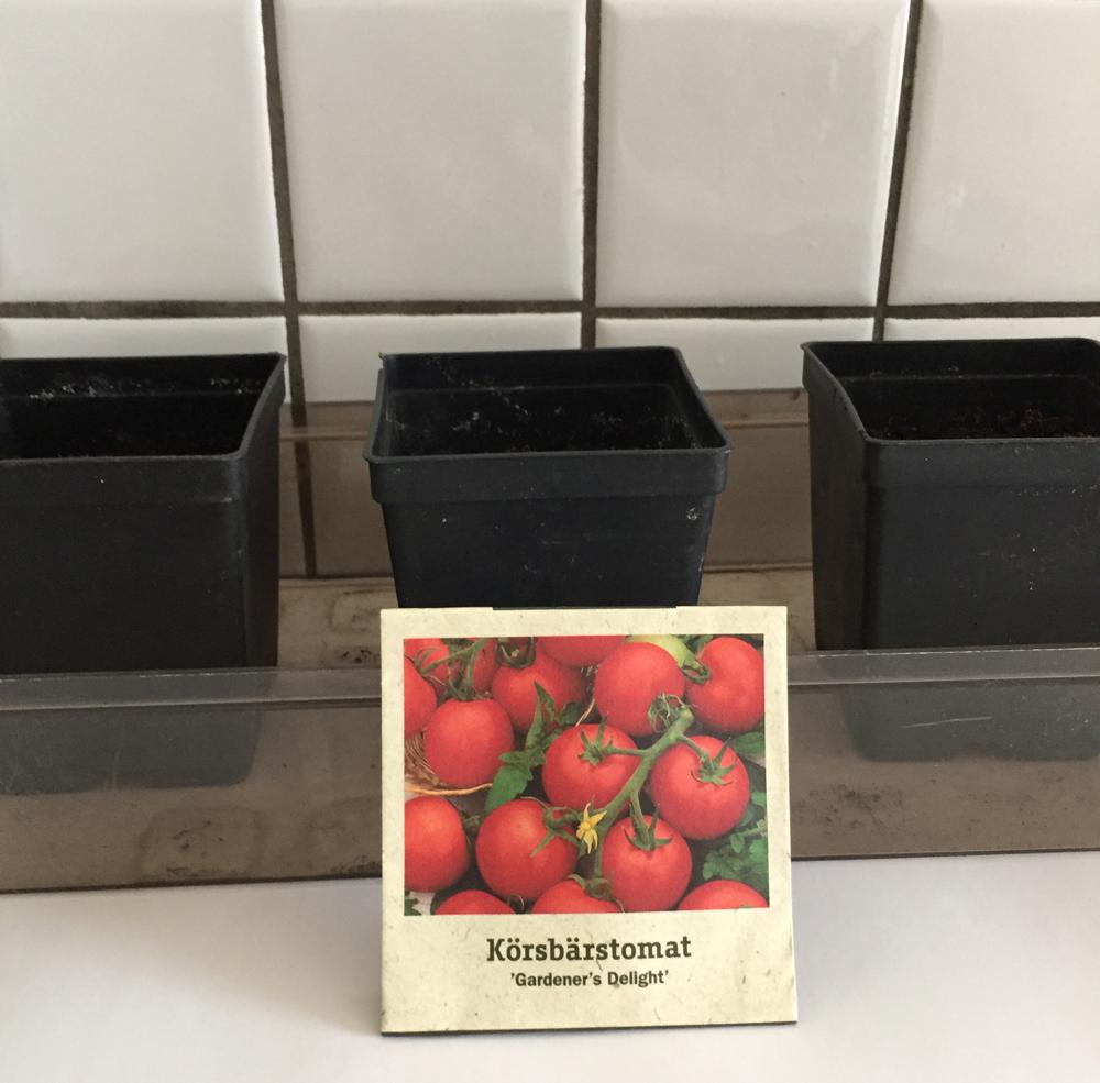 tomato-seeds