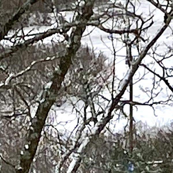 snow-27febr2020