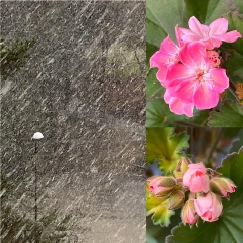 sno-blom-4mars